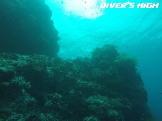 [보홀 스쿠버다이빙 로그북] 2016-12-01 보홀 다이빙의 시작