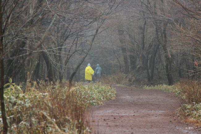 사려니 숲길의 봄비