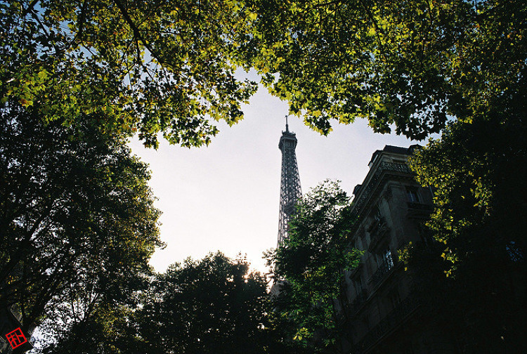 파리의 숲