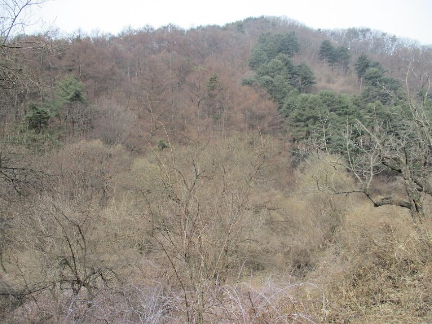 광덕산 산행1(3월 말, 천안), 온화한 봄기운