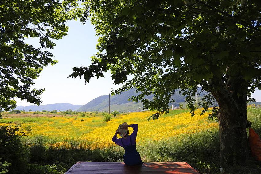 노란물결 넘실대는 창원 북면수변생태공원 금계국과 함께 상쾌한 기분을 즐겨보세요^^(창원명소)
