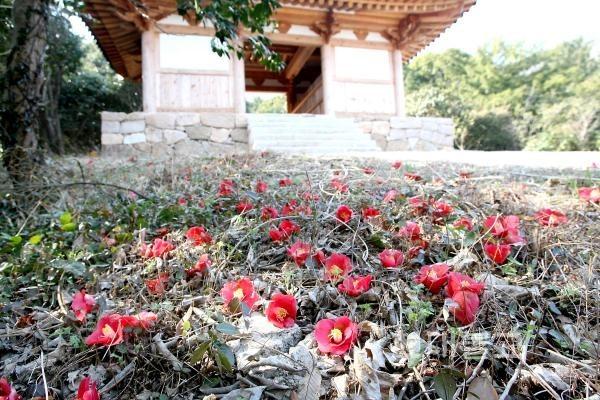 강진 만덕산 백련사 동백꽃