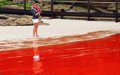 호주 핏빛바다, 붉게 물든 해변