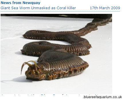 '정체 불명 괴물' 독 뿜고 산호초 박살내는 1.2m 대형 벌레 발견
