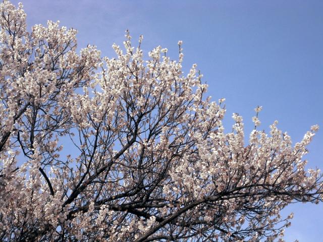 어느새 봄인가......