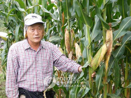 옥수수박사 김순권
