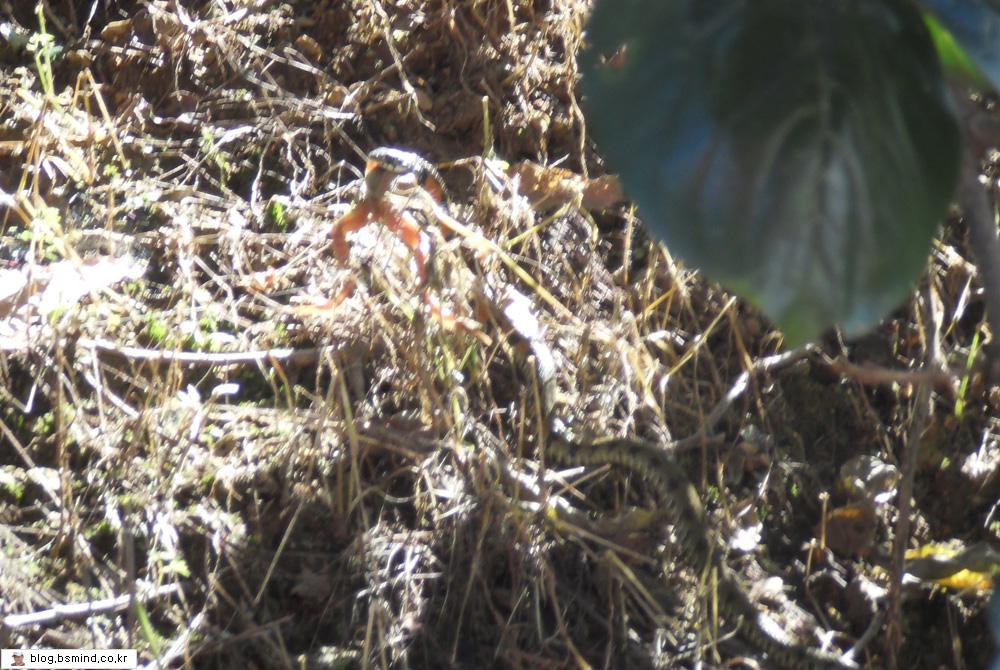 뱀과개구리