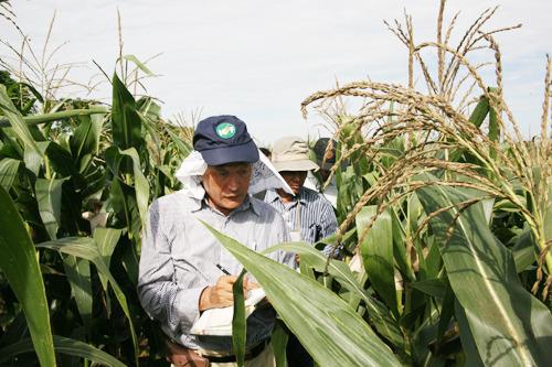 미얀마 Tatkone 시험장 방문