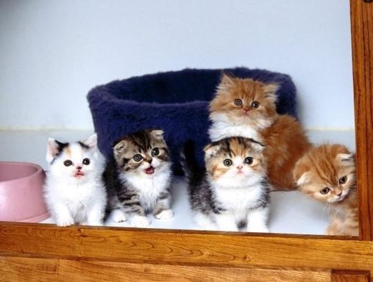 고양이털 수공예, 고양이 털, 고양이 책, 고양이 공예품, 고양이 헤어볼, 고양이 리뷰, 고양이 이슈