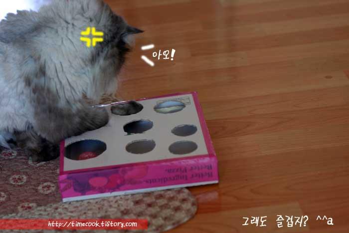 고양이가 좋아하는 장난감 리폼 한 피자박스를 고양이 장난감으로 활용함
