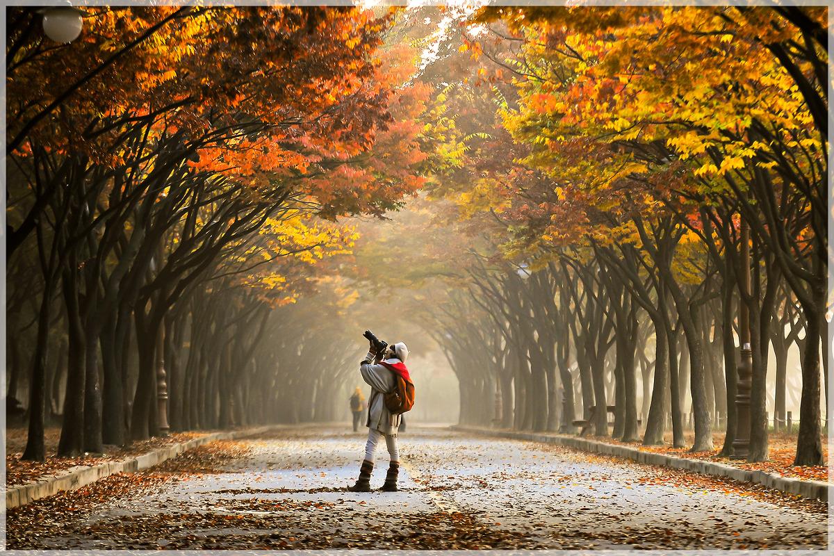 인천대공원 단풍길 (13.11.5)
