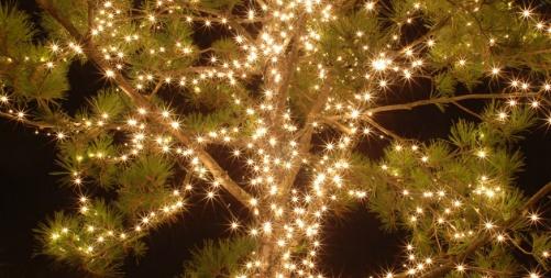 성탄트리 불빛
