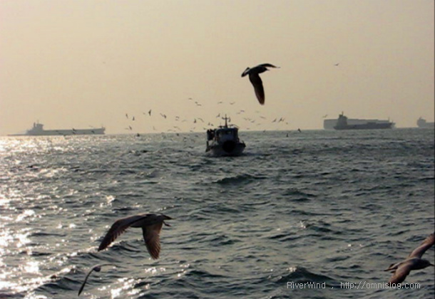 부산갈매기 태종대-주전자섬