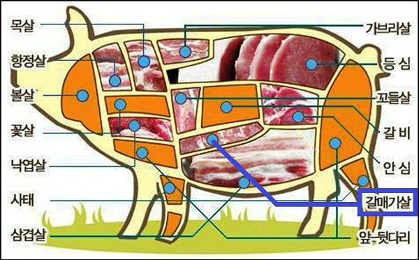 돼지고기 부위와 용도.