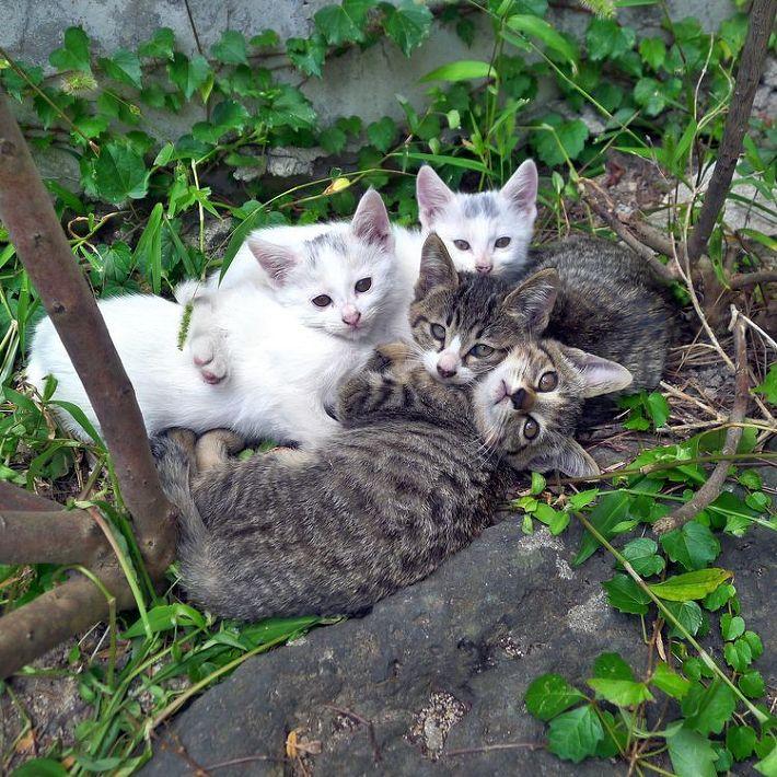 고양이 무료분양 합니다. 대전 지역.....