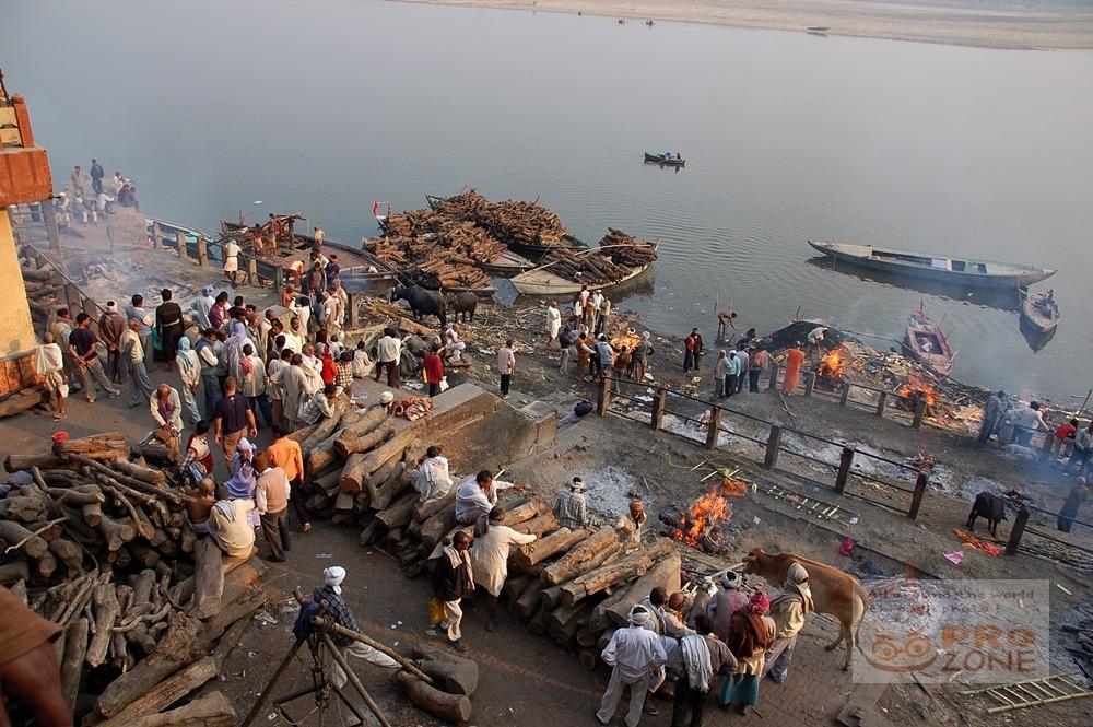 [인도] 바라나시의 화장터 마니카르니카 가트 <2> 화장에 사용되는 땔감 장작 나무들