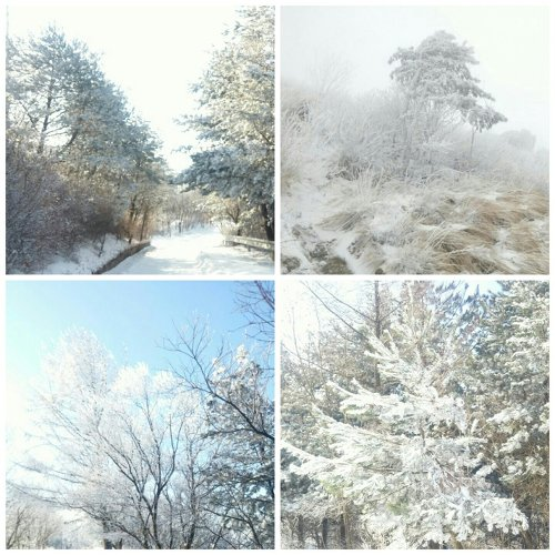 소백산 눈꽃
