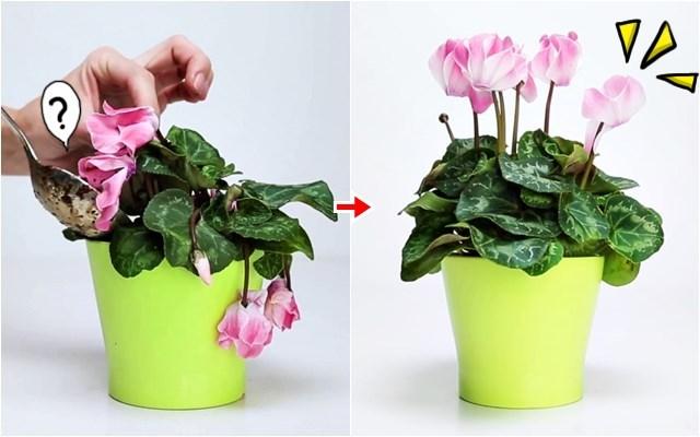 홈가드닝 시든 식물 살리기 진공블렌더