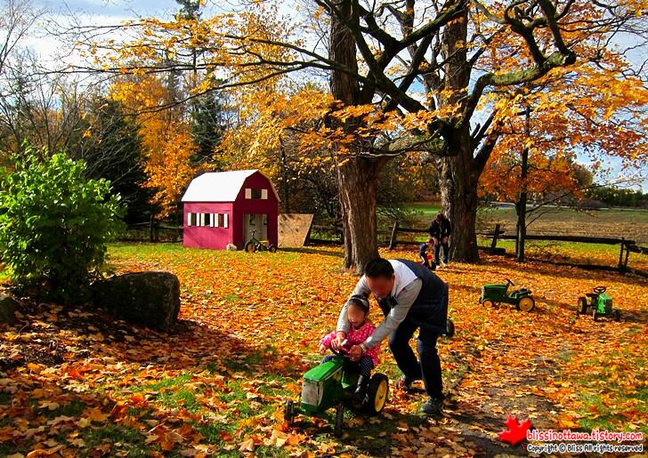 캐나다 농장