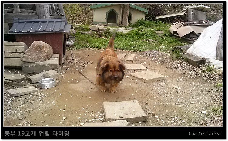 화야산 쉼터의 화장실 앞에 있던 강아지 ^^