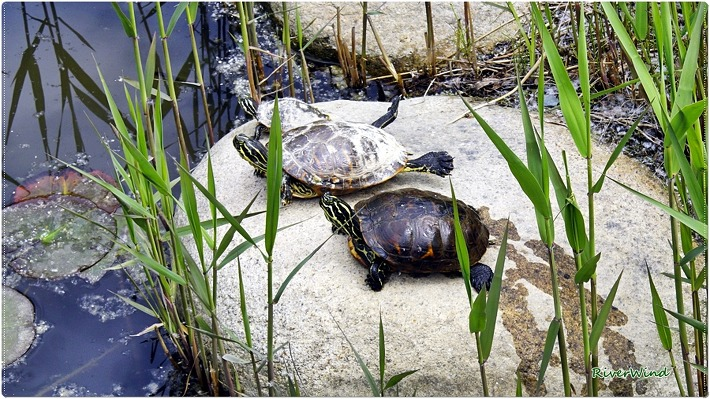 일광욕하는 거북이들/OmnisLog