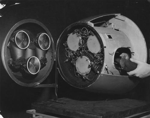 비둘기 유도 미사일 Project Pigeon