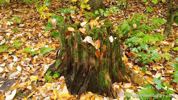 가을 그루터기