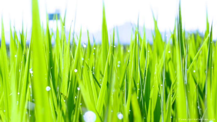 초록향기사진