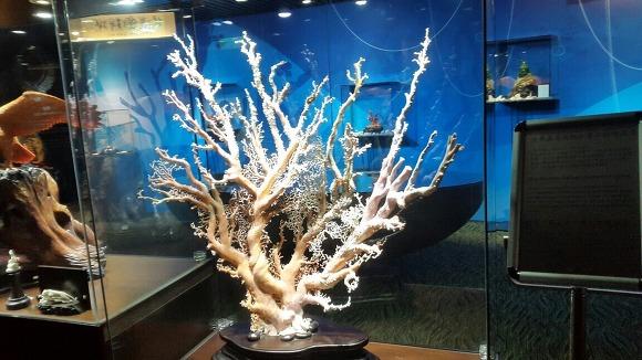 30. 타이베이101빌딩 산호초