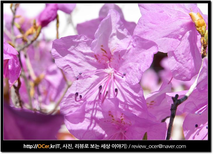 DSLR, DSLR 카메라, It, Nikon, NIKON D5500, 니콘, 니콘 D5500, 리뷰, 보급형 DSLR, 보급형 DSLR 카메라, 보급형 카메라, 사진, 봄 사진, 봄꽃 사진, 봄꽃 사진 잘 찍는 법, 꽃사진 잘찍는 방법