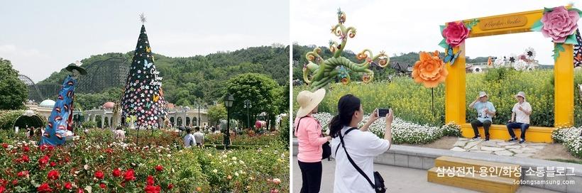 장미 축제