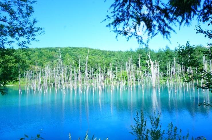 홋카이도 여름여행, 추천 관광지(후라노,비에이,샤코탄)