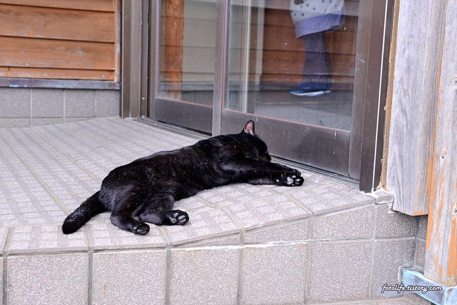 [일본/후쿠오카] 이제는 고양이섬을 떠나야 할 시간..