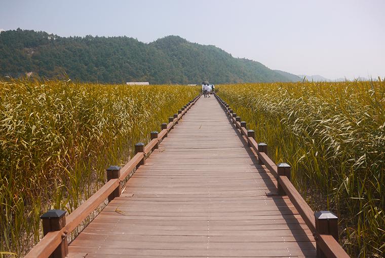 여자 혼자 떠나기 좋은 여행지 순천만 자연생태공원