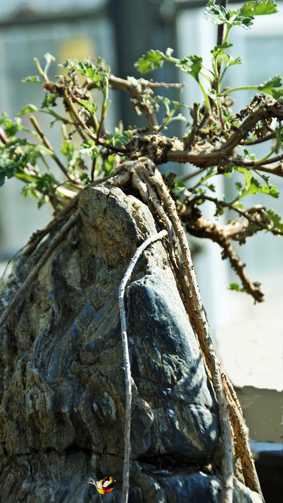 석부작(石附作) 목부작(木附作)