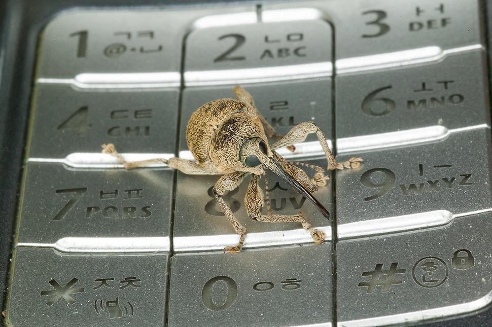 외계에서 온 곤충 바구미
