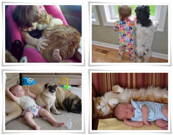아토피 한의원, 임신 애완동물, 결혼 앞둔 미혼 남녀 애완동물,