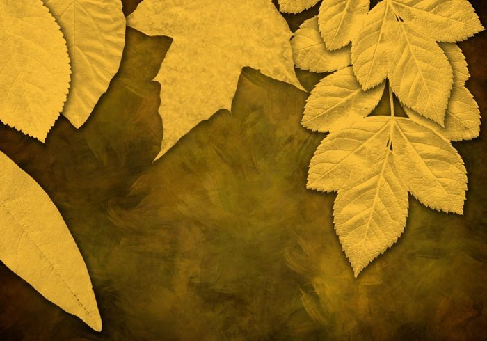 7 가지 나뭇잎(leaf) 포토샵 브러쉬 - 7 Free Leaf Photoshop Brushes