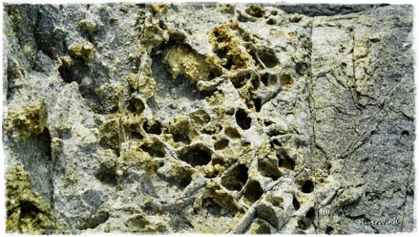 굴섬의 바위구멍들