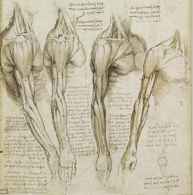 레오나르도 다빈치