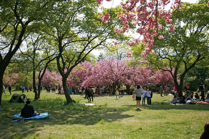 [경주여행] 불국사 겹벚꽃 연인들 위한 봄나들이 명소!