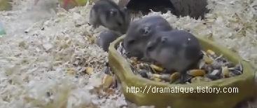 햄스터의 작은공간 -Happy World of Hamsters