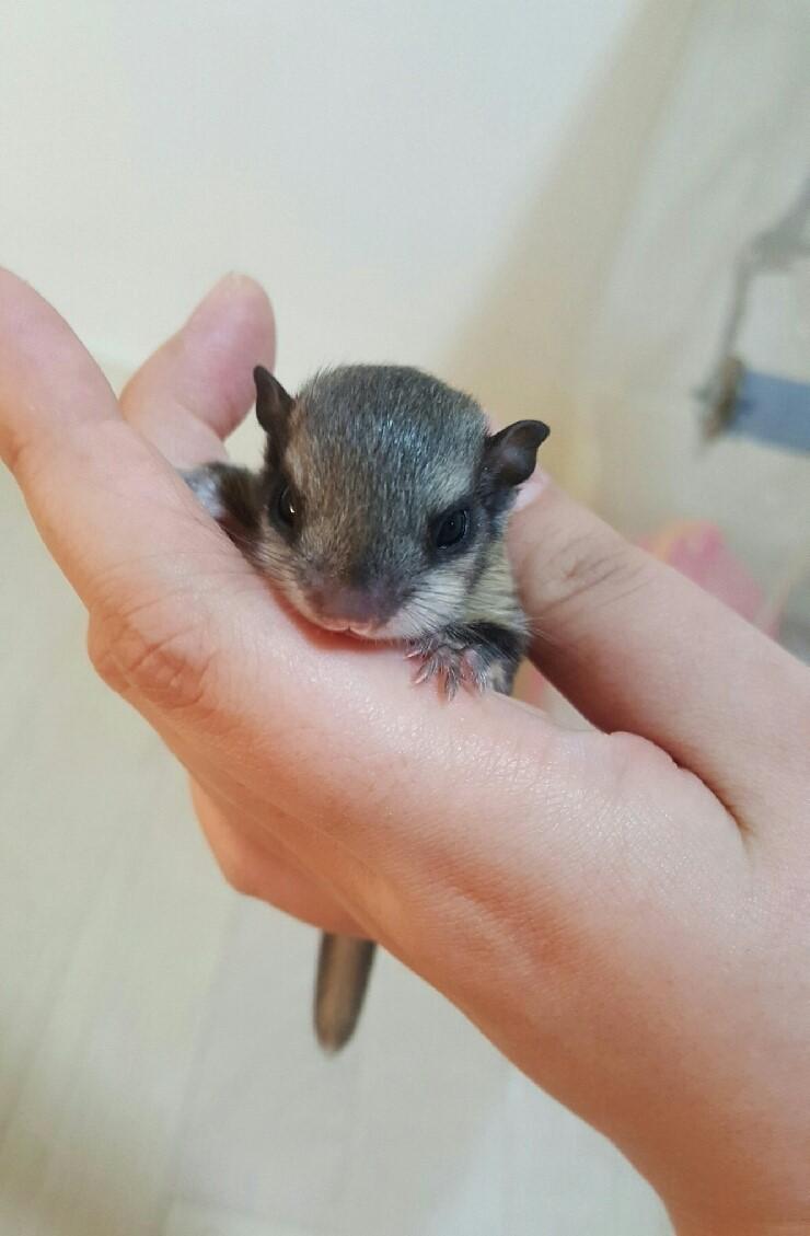 아기다람쥐
