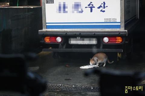 고양이, 수산시장