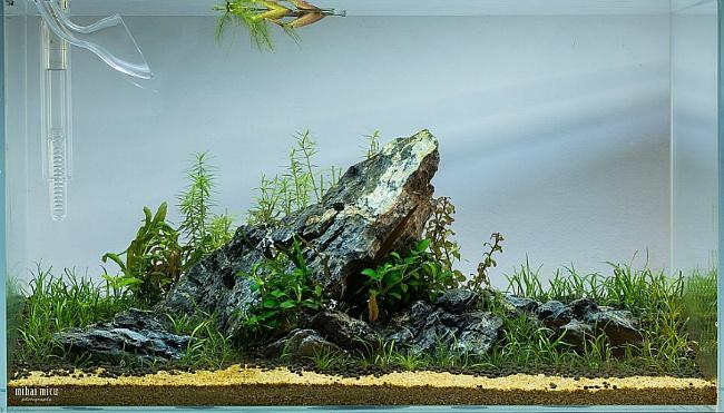 UK Aquatic Plant Society