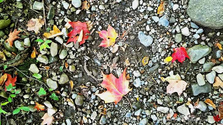 단풍잎입니다