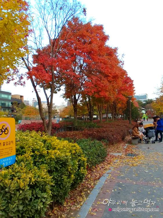 서울숲 단풍
