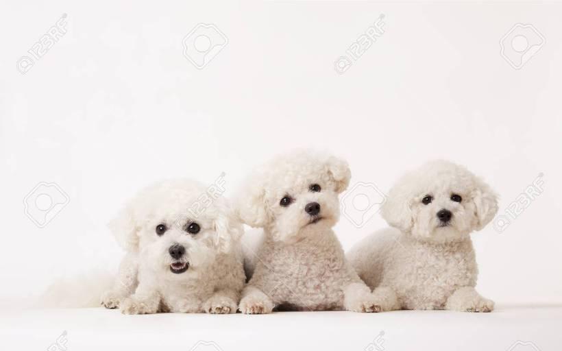 귀여운 강아지들