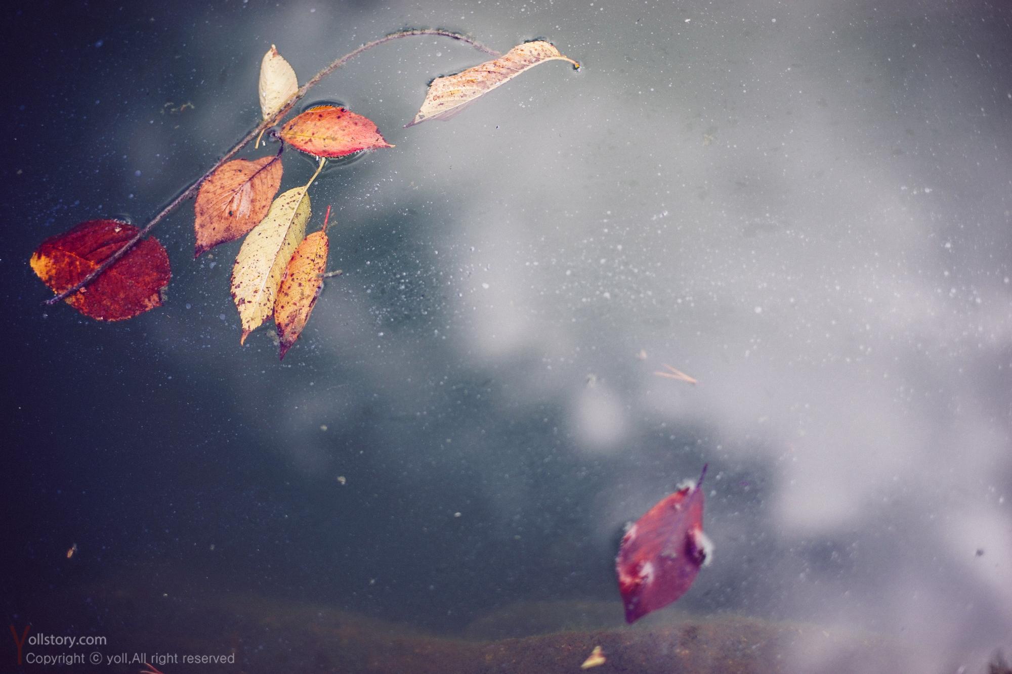 가을 ..흔적을 담다
