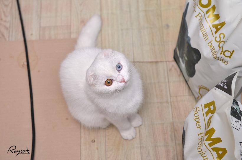 먼지 없는 고양이 모래 로마샌드